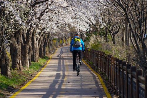 Бесплатное стоковое фото с байкер, велосипед, велосипедист