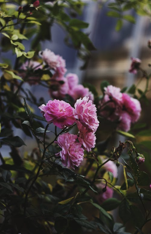 Foto profissional grátis de arbusto, aumentar, aumento