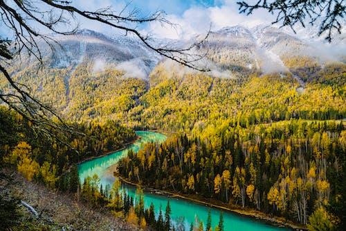 Gratis stockfoto met bergen, bomen, Bos