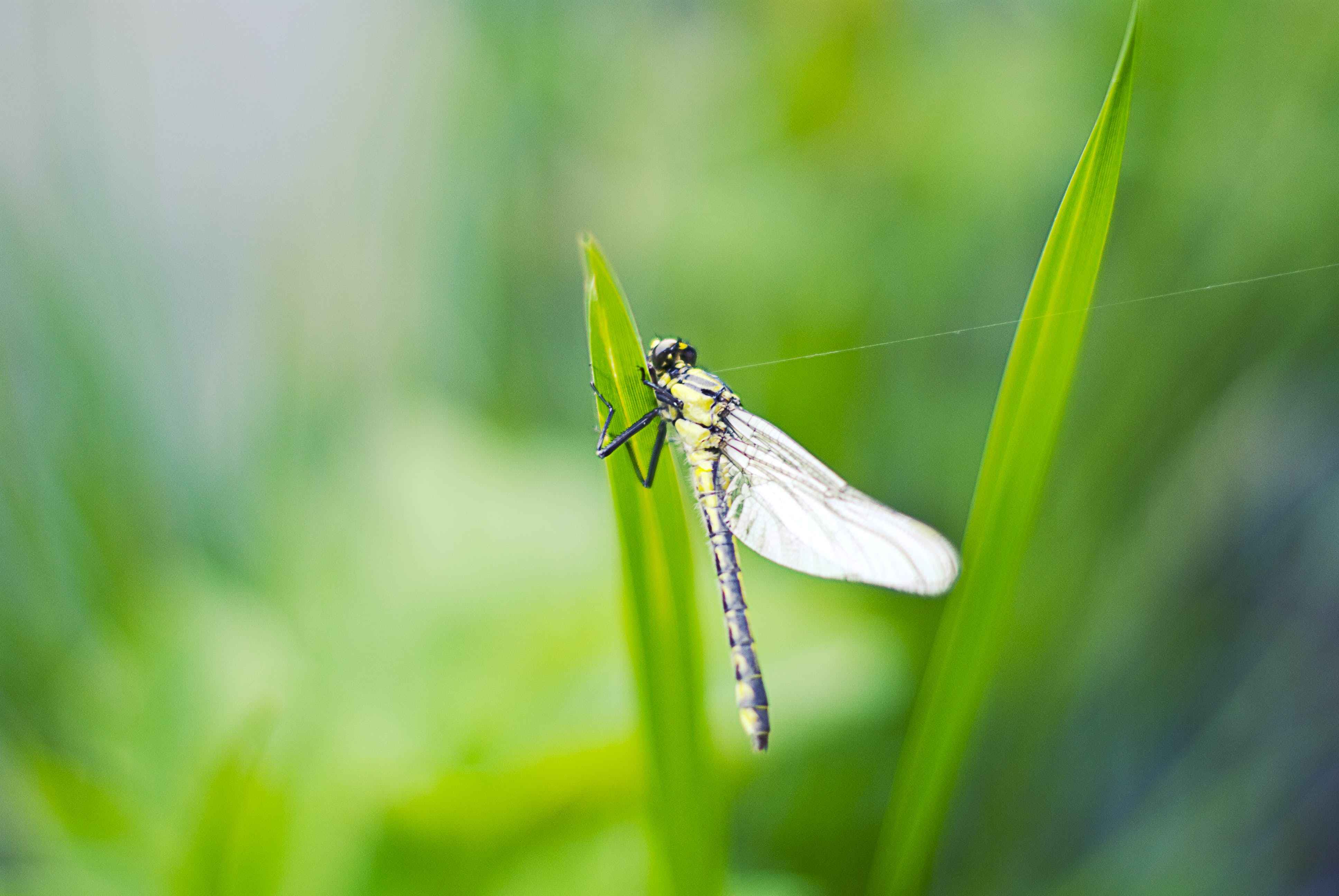 Selective Focus Photo of Yellow Damselfly on Green Leaf