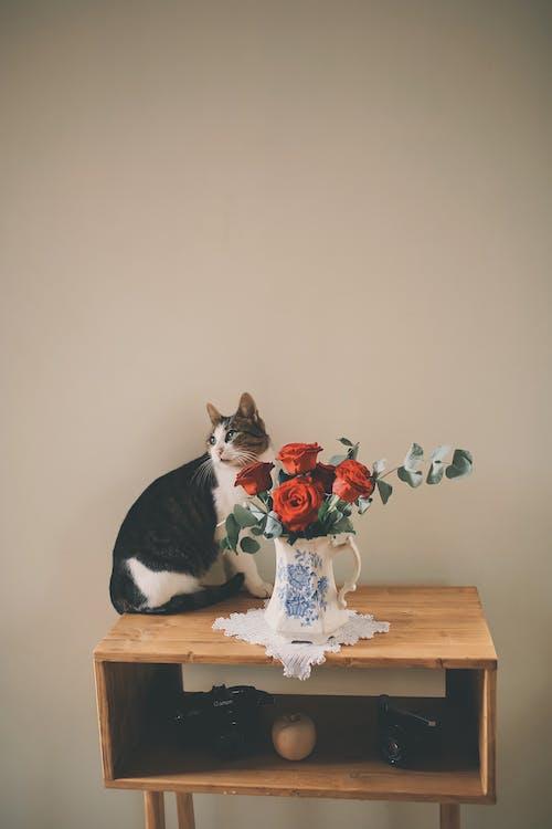 Foto d'estoc gratuïta de animal, assegut, decoració