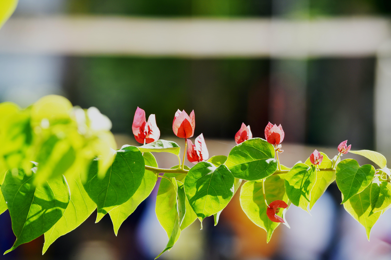 Free stock photo of #Blur #Fouce, #flower