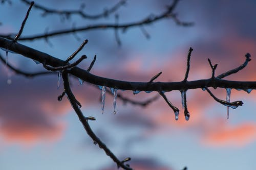 Brown Tree Branch With Ice