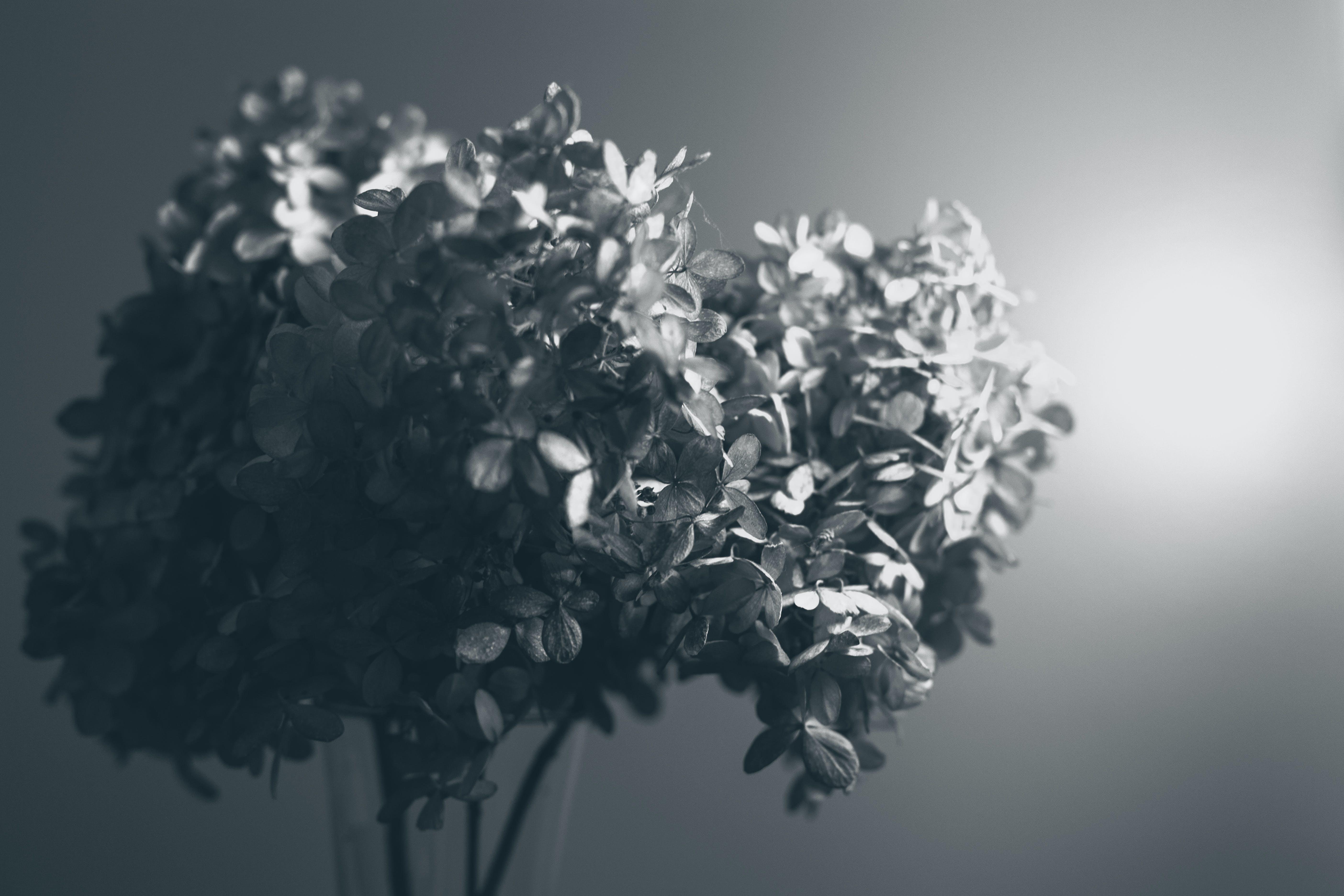 Free stock photo of art, flowers, summer, garden
