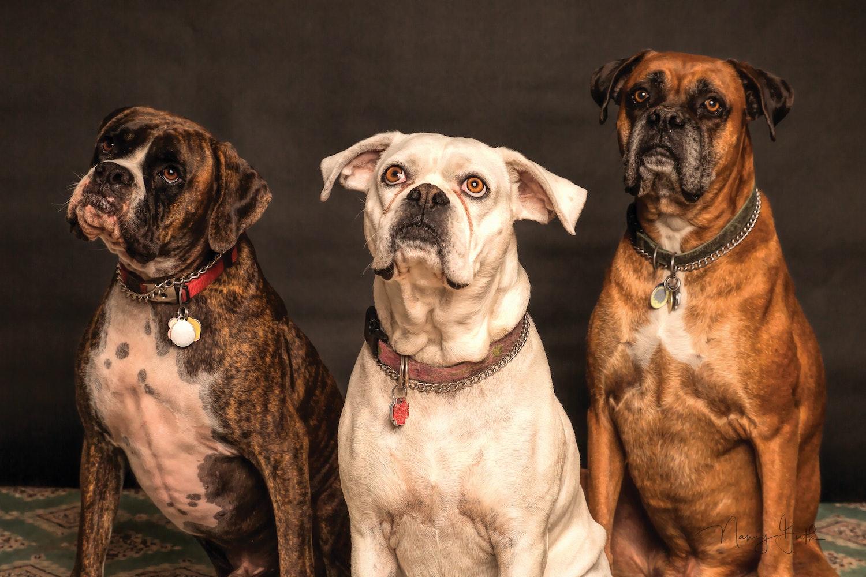 1000 Great Dogs Photos Pexels Free Stock Photos