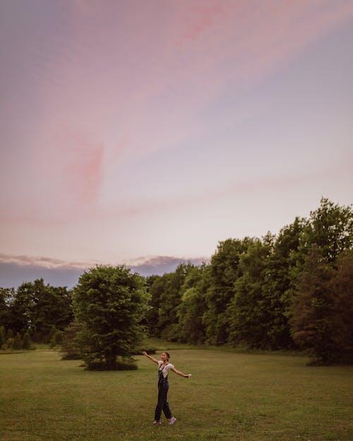 Imagine de stoc gratuită din apus, arbori, bucurie