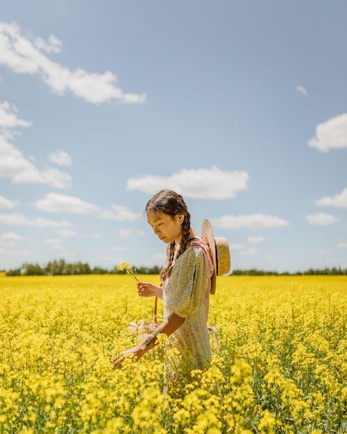 Foto stok gratis bidang, biji minyak, bunga