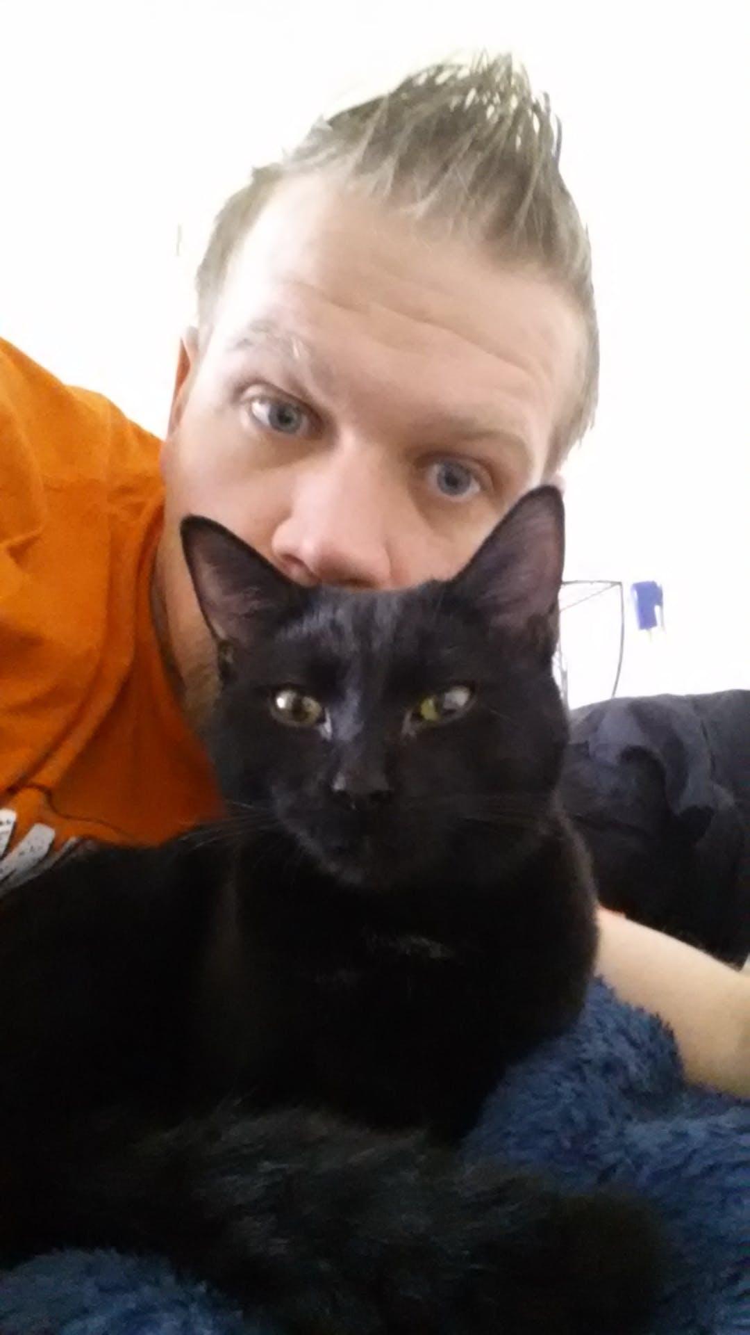 Free stock photo of black, cat, crazy cat-dude, gato