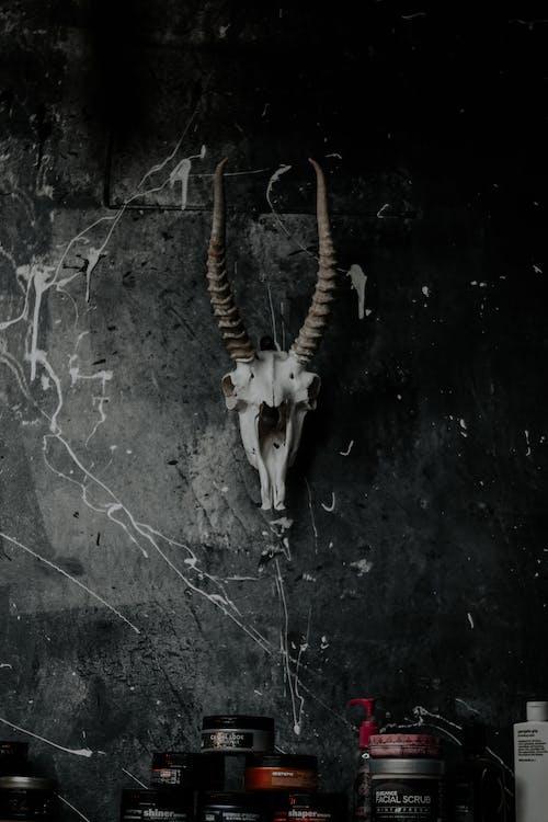 Antelope Skull on Black Wall