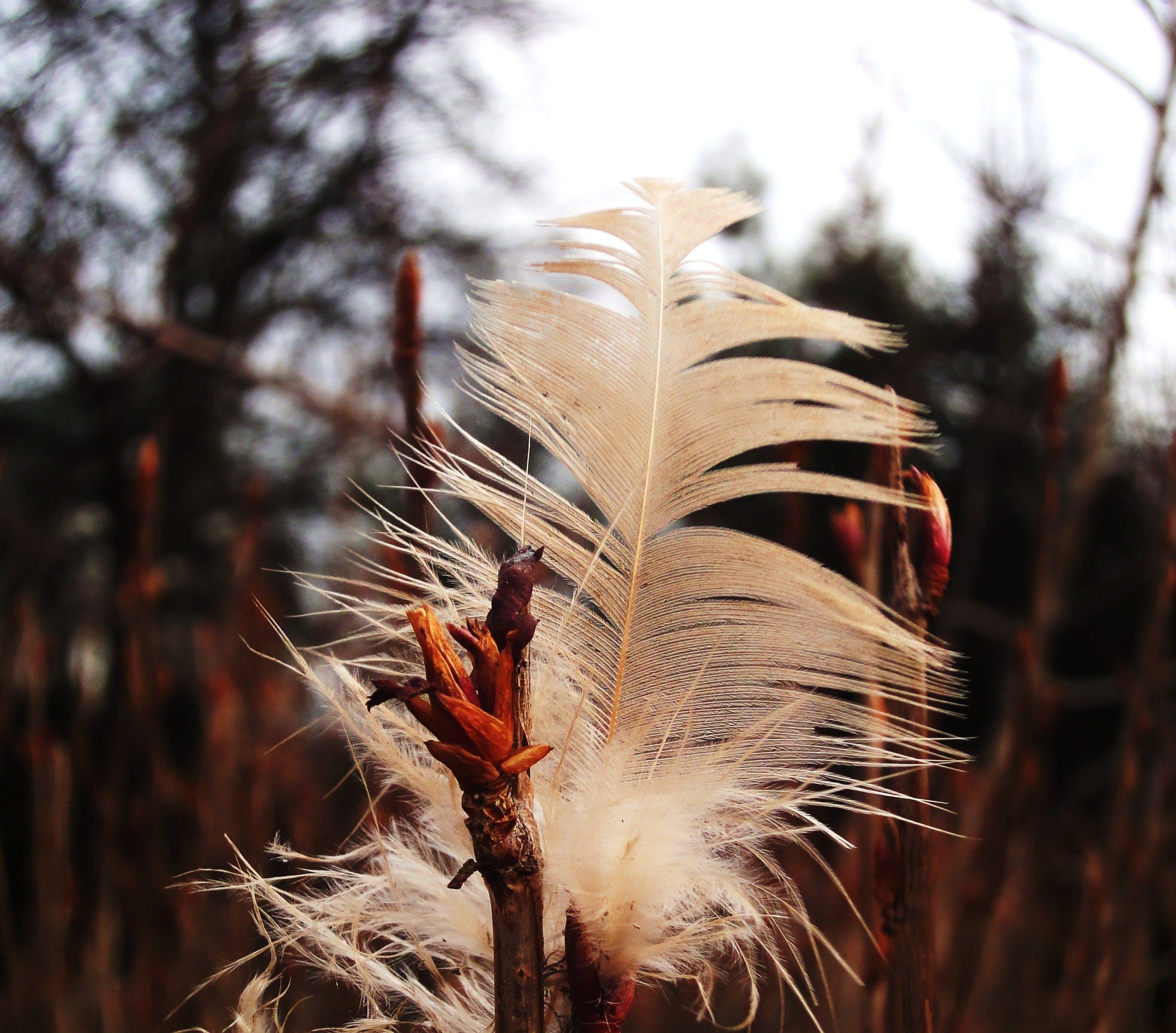 Free stock photo of bushes, feather, garden