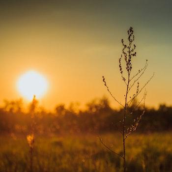 Free stock photo of sun, stalk