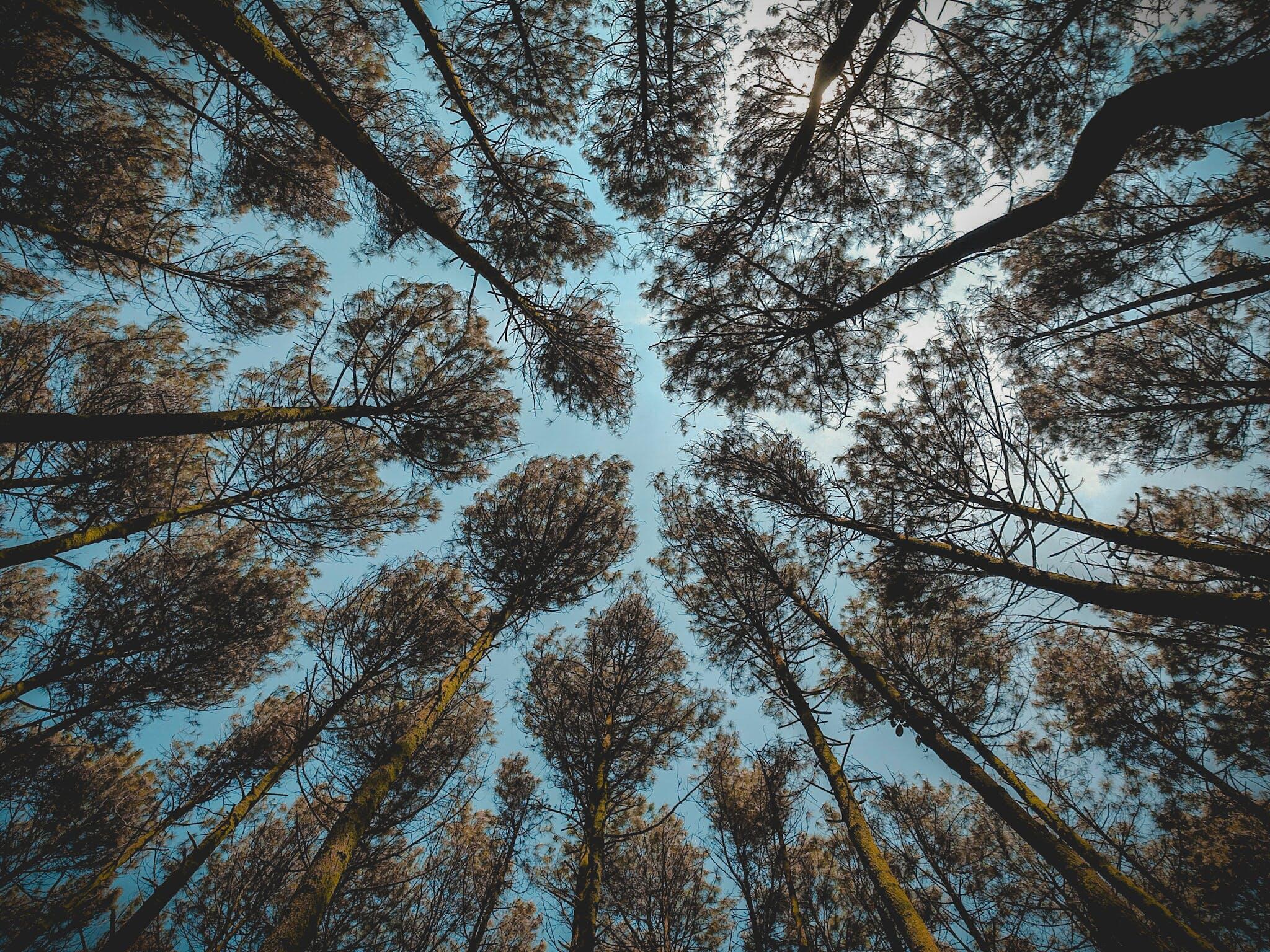 Foto profissional grátis de árvores, azul, cênico, céu azul