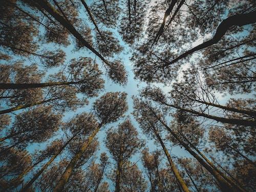 Kostnadsfri bild av blå, blå himmel, dagsljus, grenar