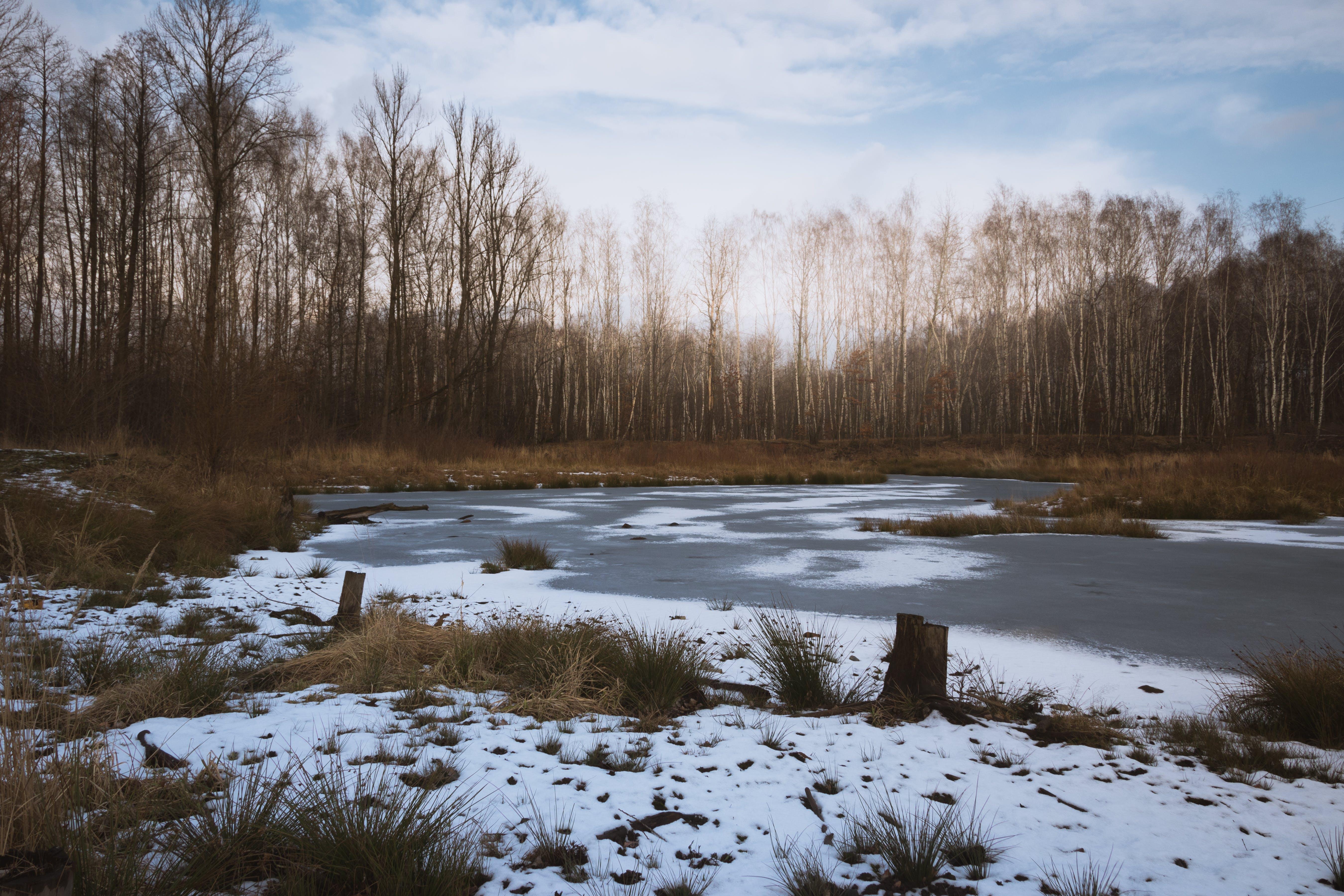 Free stock photo of ice, snow, trees, winter