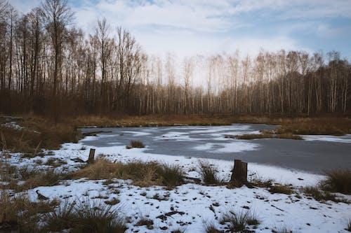 冬季, 冰, 樹木, 雪 的 免费素材图片