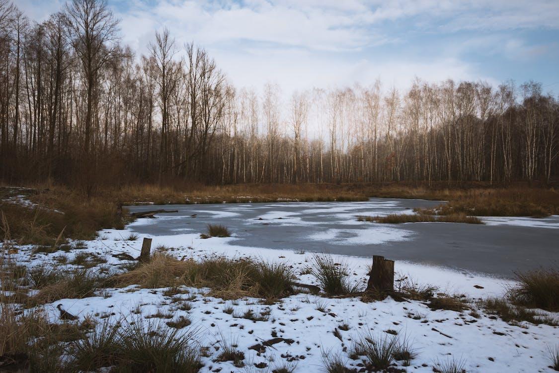 Ilmainen kuvapankkikuva tunnisteilla jää, lumi, puut