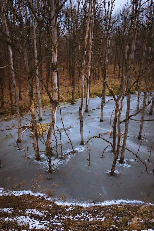 Foto d'estoc gratuïta de arbres, gel, hivern, neu