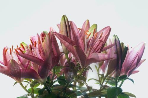 增長, 微距拍摄, 植物群 的 免费素材图片