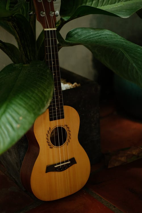 原聲吉他, 四弦琴, 垂直 的 免费素材图片