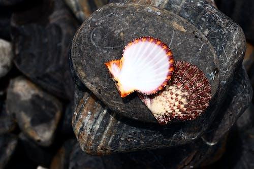 deniz kabukları içeren Ücretsiz stok fotoğraf