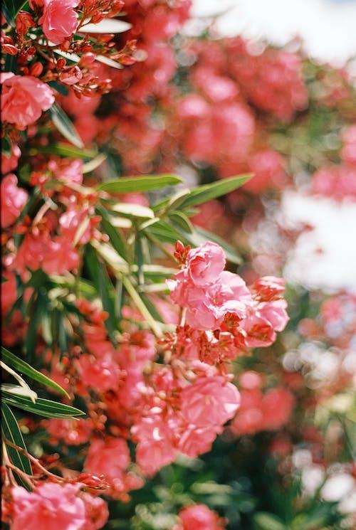 Fotobanka sbezplatnými fotkami na tému flóra, jemný, kvet ovocného stromu
