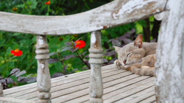 Short-fur Gray Cat Sleeping on Gray Wooden Surface