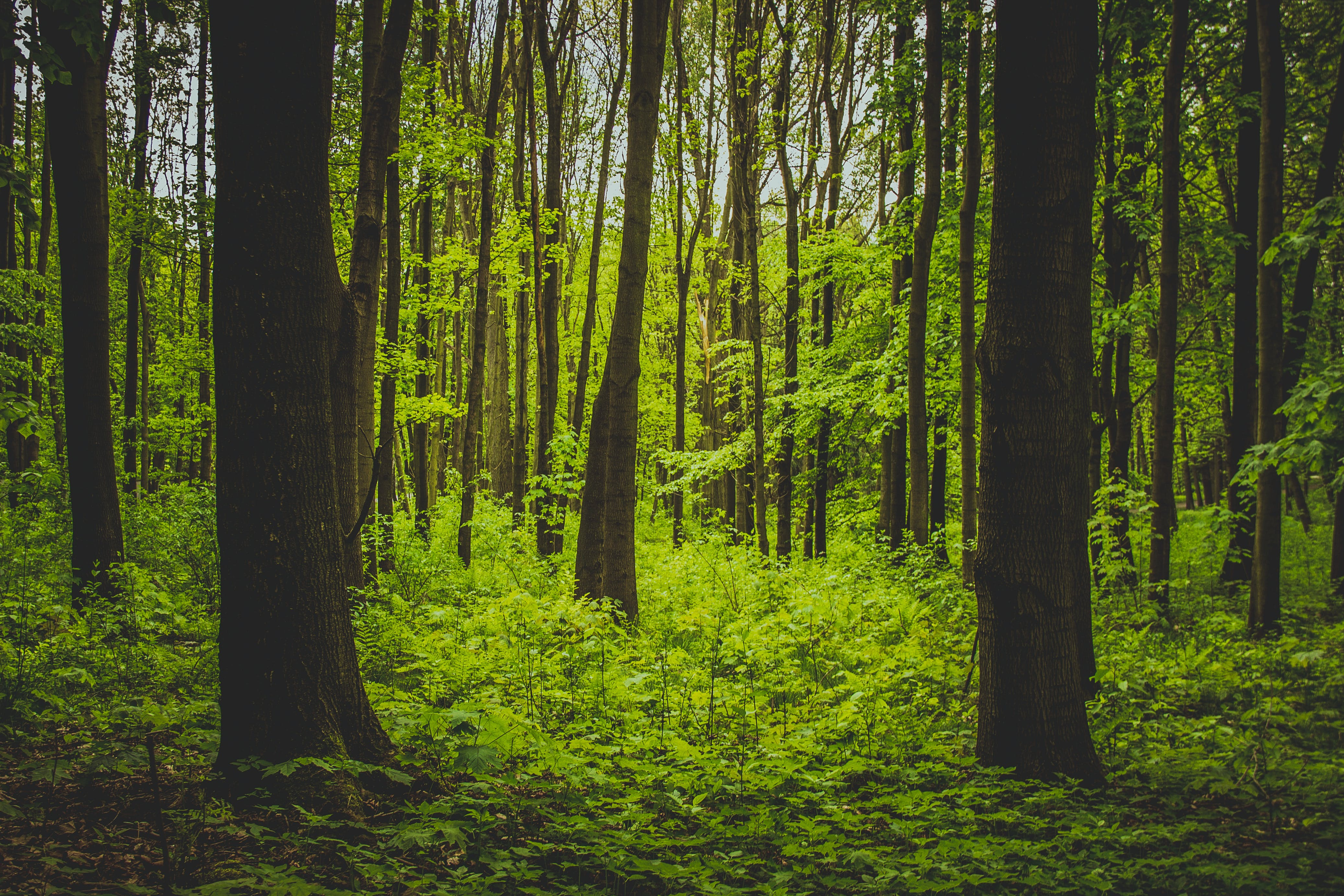 Free stock photo of forest, tree