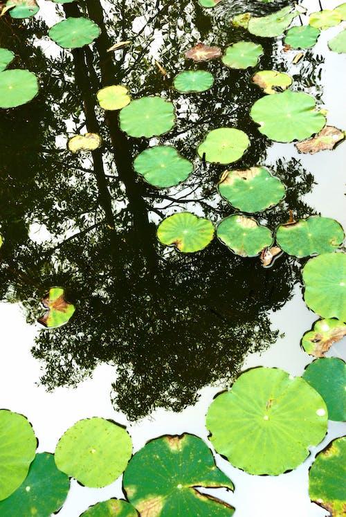 Gratis stockfoto met reflectie