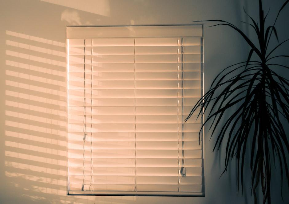 Photo of Window Blinds Near Plant