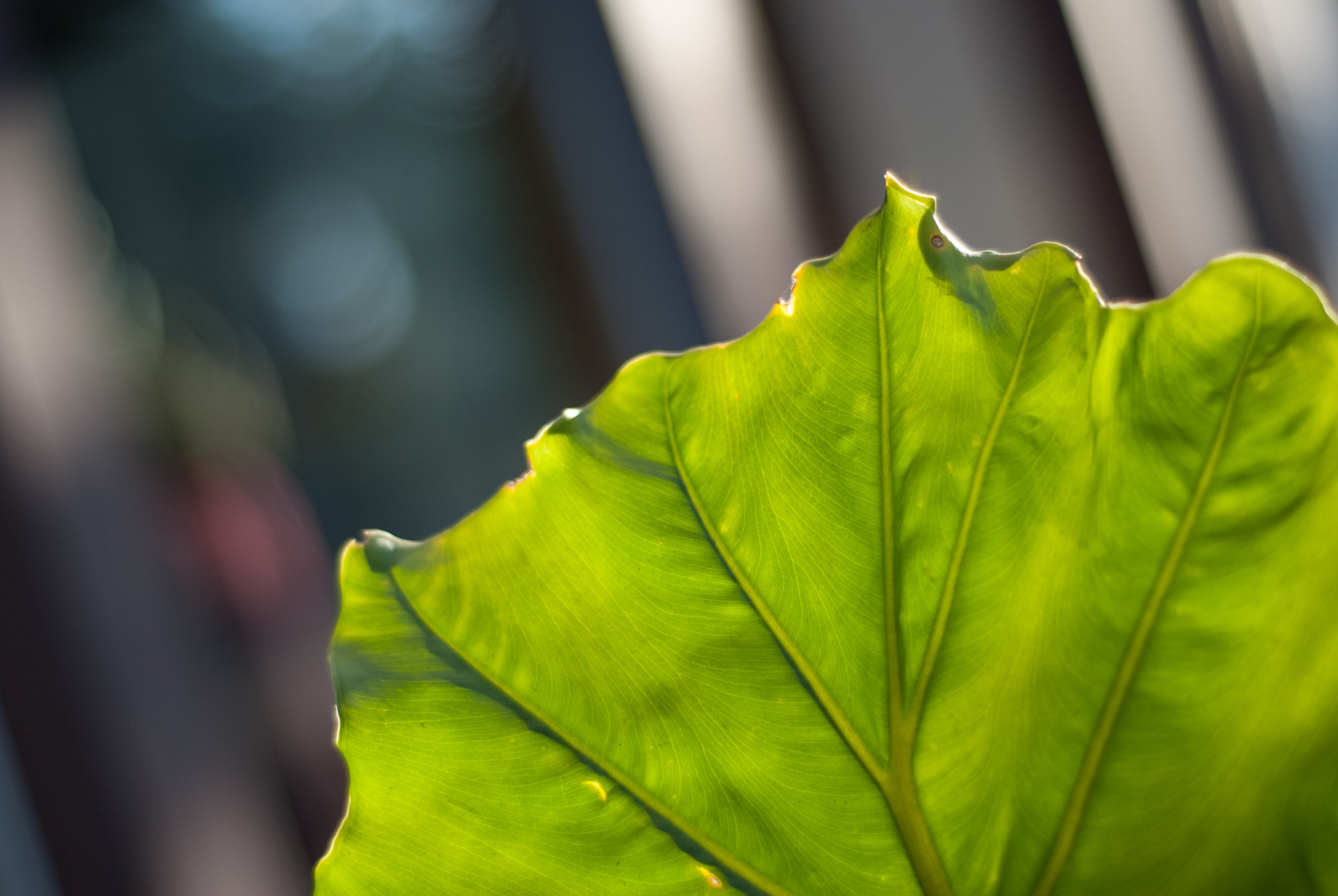 Close-up Photography of a Leaf