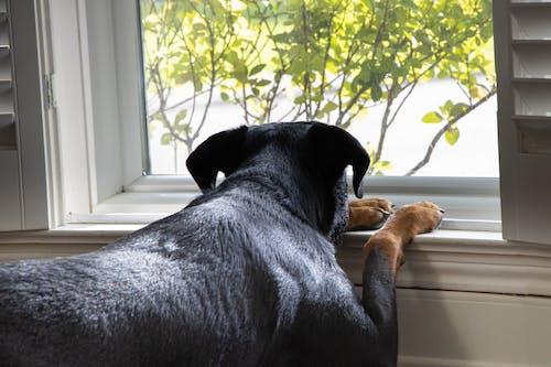 Free stock photo of alone, black dog, dog