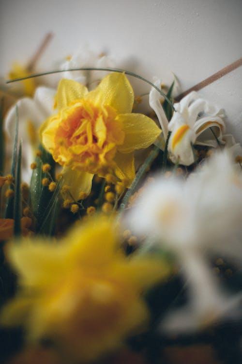 Fotos de stock gratuitas de arreglo floral, Boda, brillante