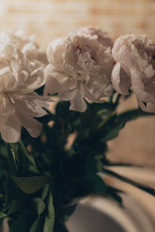 Fotos de stock gratuitas de amor, arreglo floral, Boda