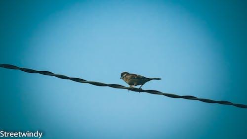Photos gratuites de chim sẽ