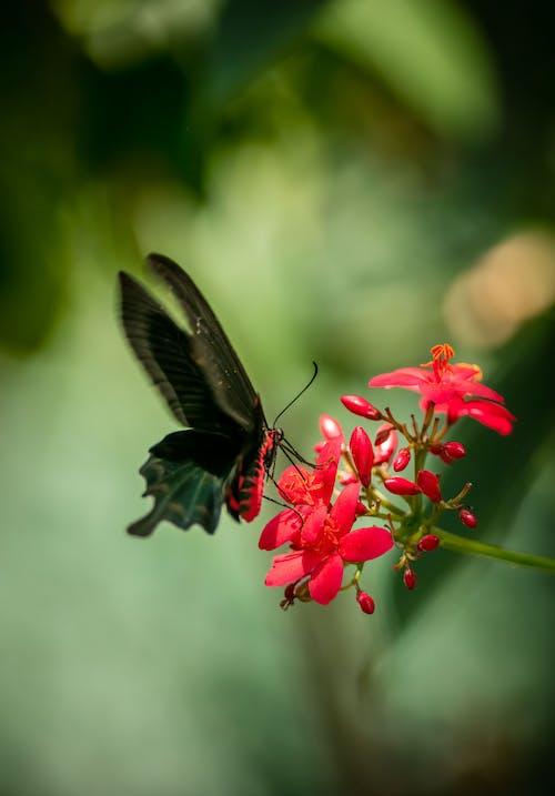 곤충, 군주, 나비, 색깔의 무료 스톡 사진