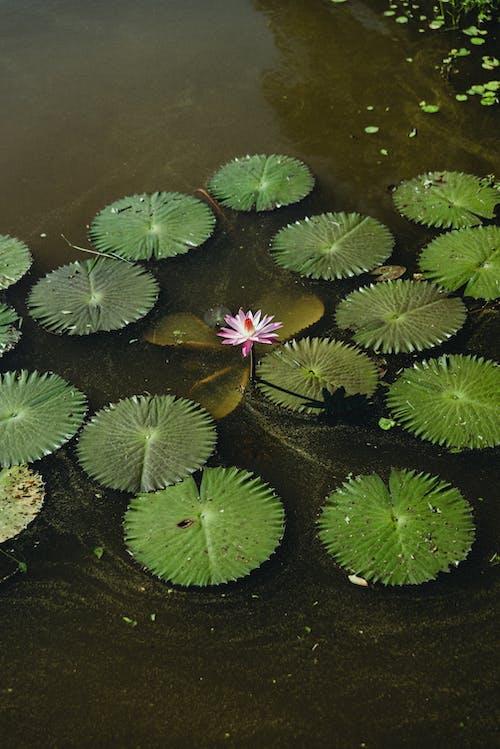 Безкоштовне стокове фото на тему «вертикальний, вода, квітка»
