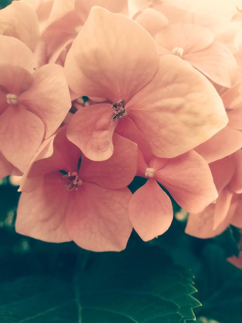 Free stock photo of apology, bloom, blossom
