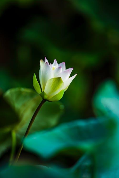 Foto profissional grátis de ao ar livre, flor, fotografia de flores