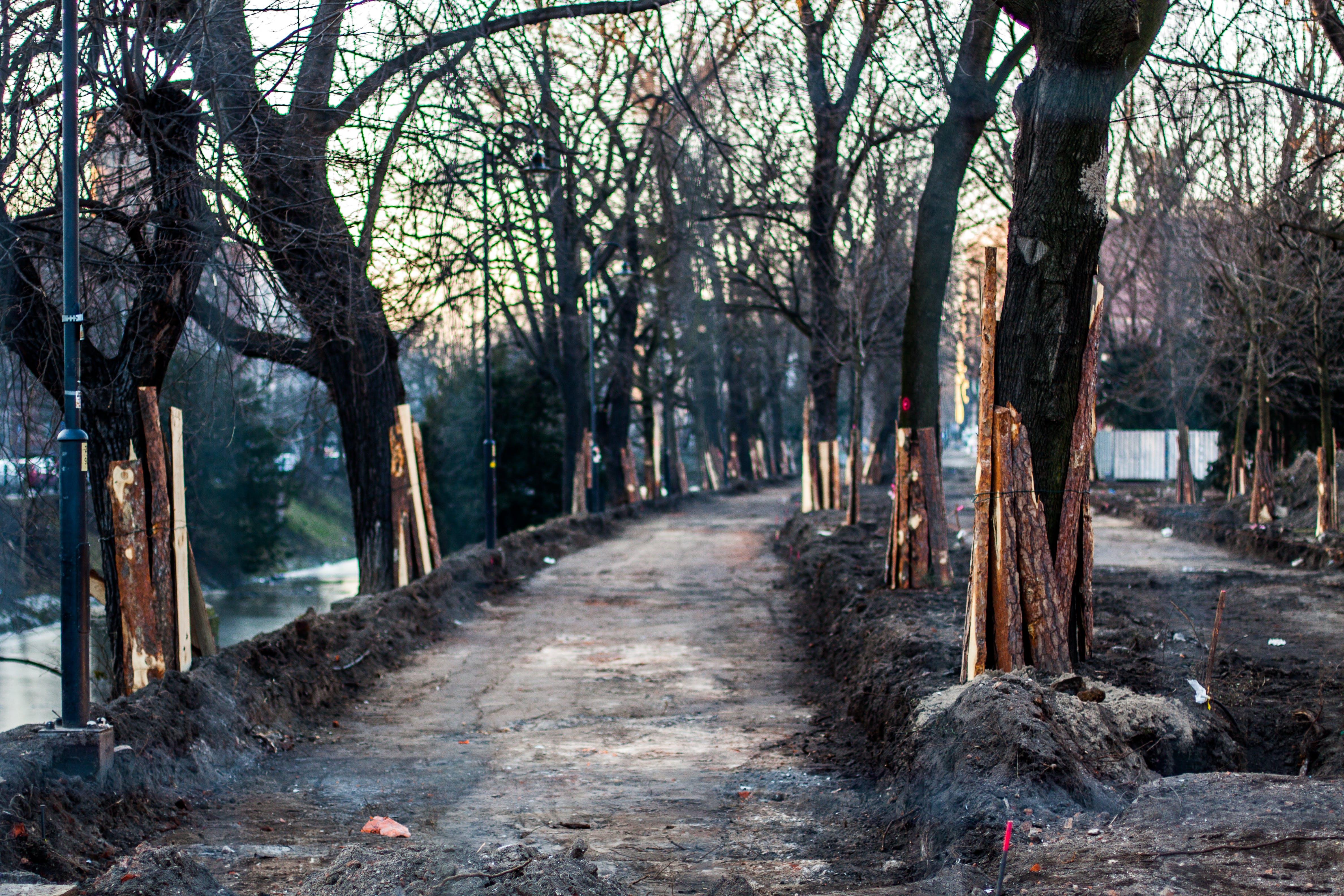 Free stock photo of park, road, trees