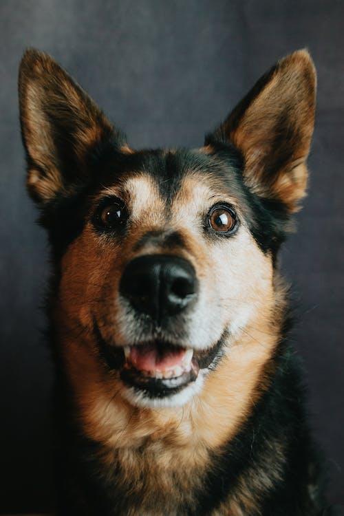 Foto profissional grátis de animal, animal de estimação, bicho