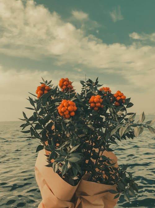 Bunches of rowan with green leaves and yellow berries wrapped in paper against endless rippling sea