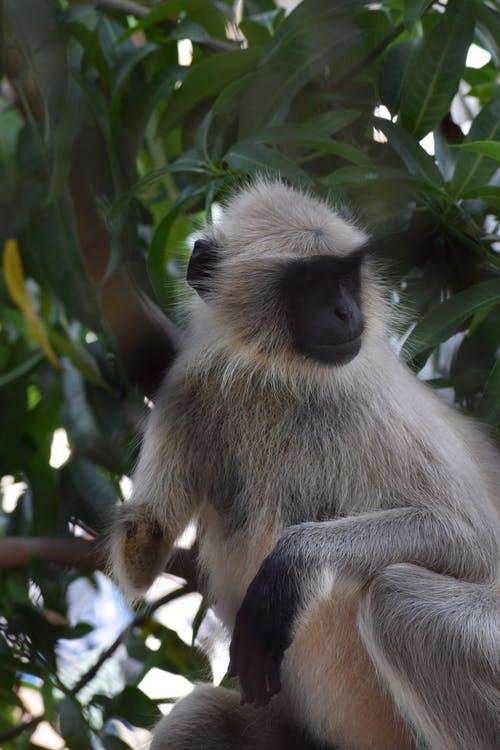 White and Gray Monkey on Tree Branch