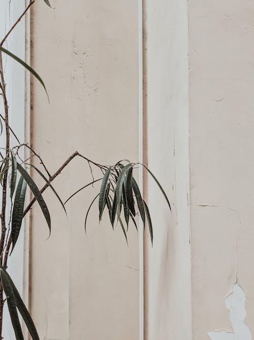 Fotobanka sbezplatnými fotkami na tému architektúra, flóra, hrubý