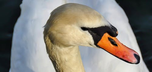 Ảnh lưu trữ miễn phí về cận cảnh, cánh, chỉ số, chụp ảnh động vật