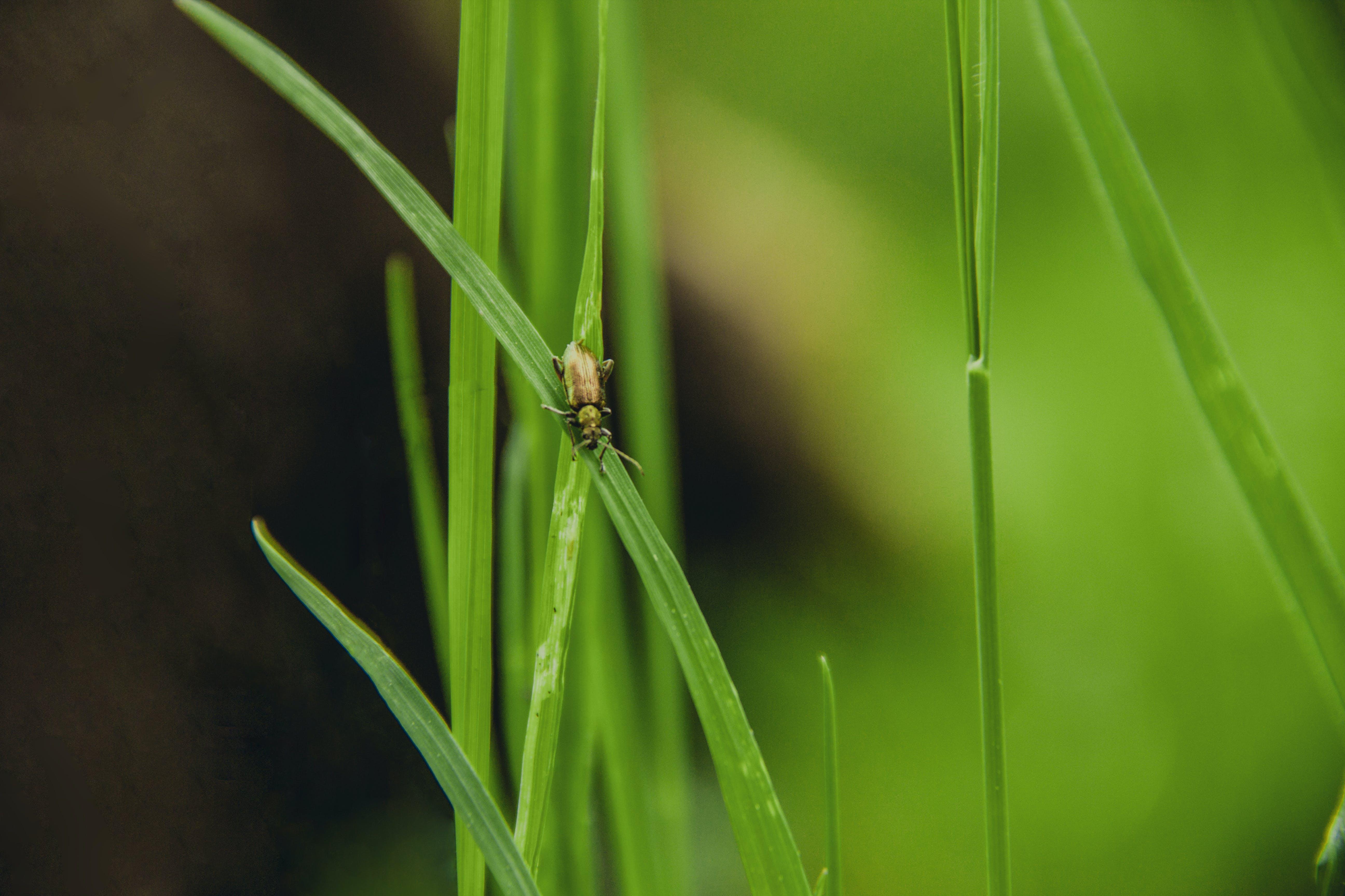 gras, insekt, verschwimmen