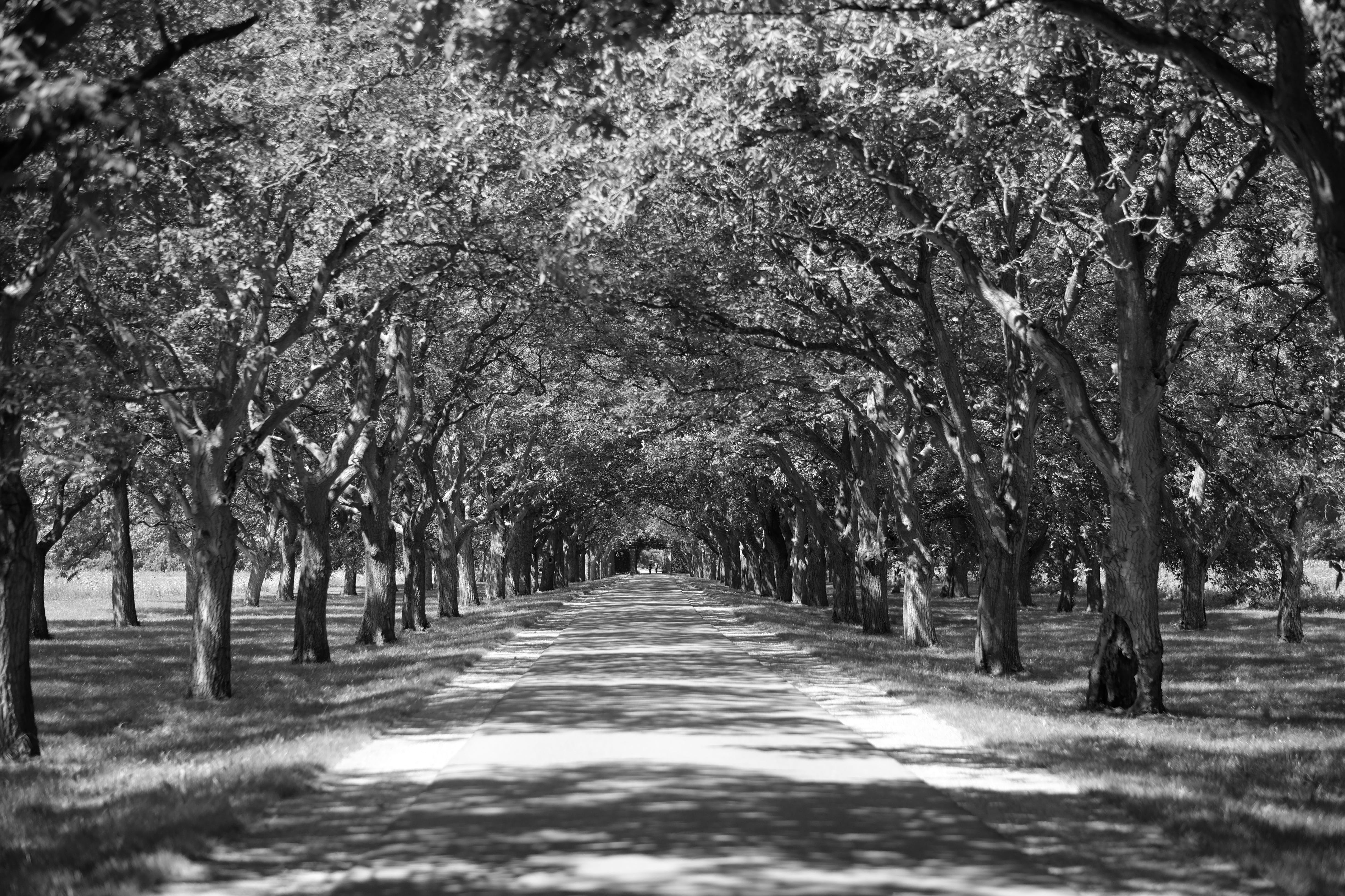 Free stock photo of black and white, countryside, road, shadows