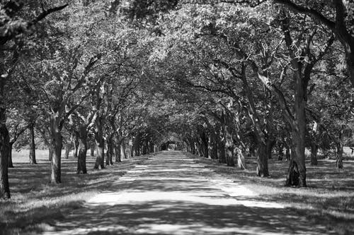 Free stock photo of black and white, road, shadows, trees