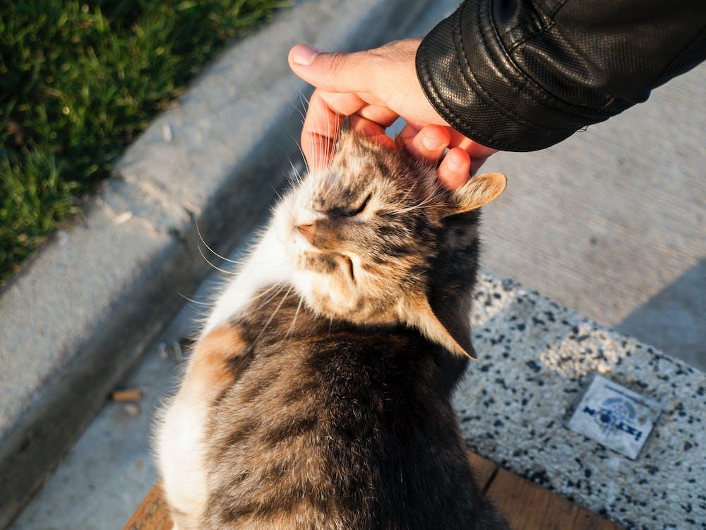 Free stock photo of cat, cat face, street