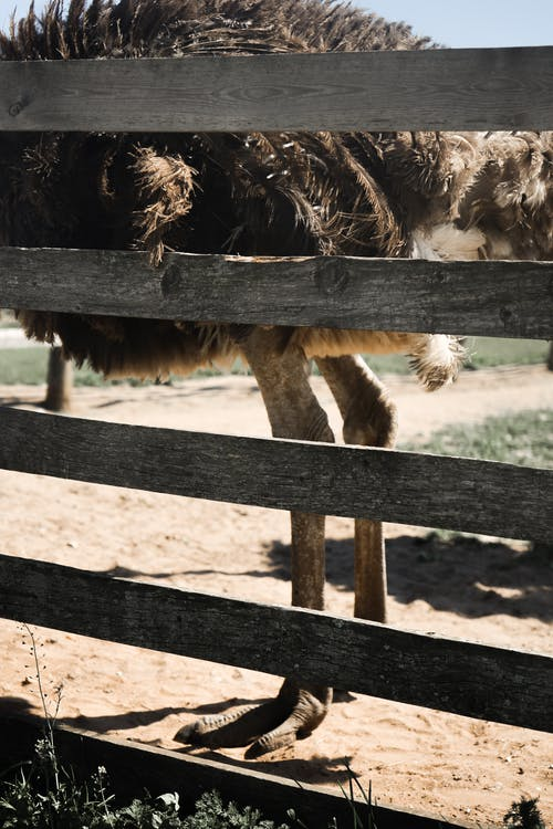 Free stock photo of agriculture, animal, barn