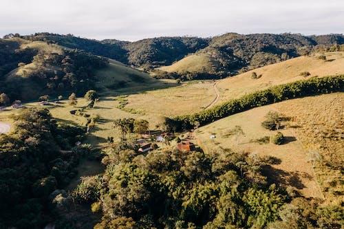 Immagine gratuita di acqua, agricoltura, albero